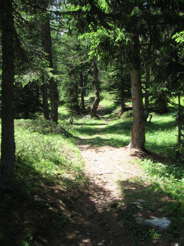 percorso iniziale nel bosco