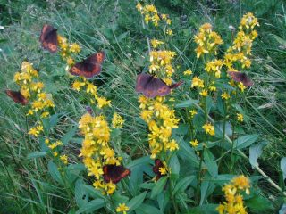 farfalle al lavoro