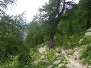 il bosco dell'alevè