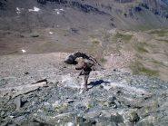 Dario in discesa dalla cima