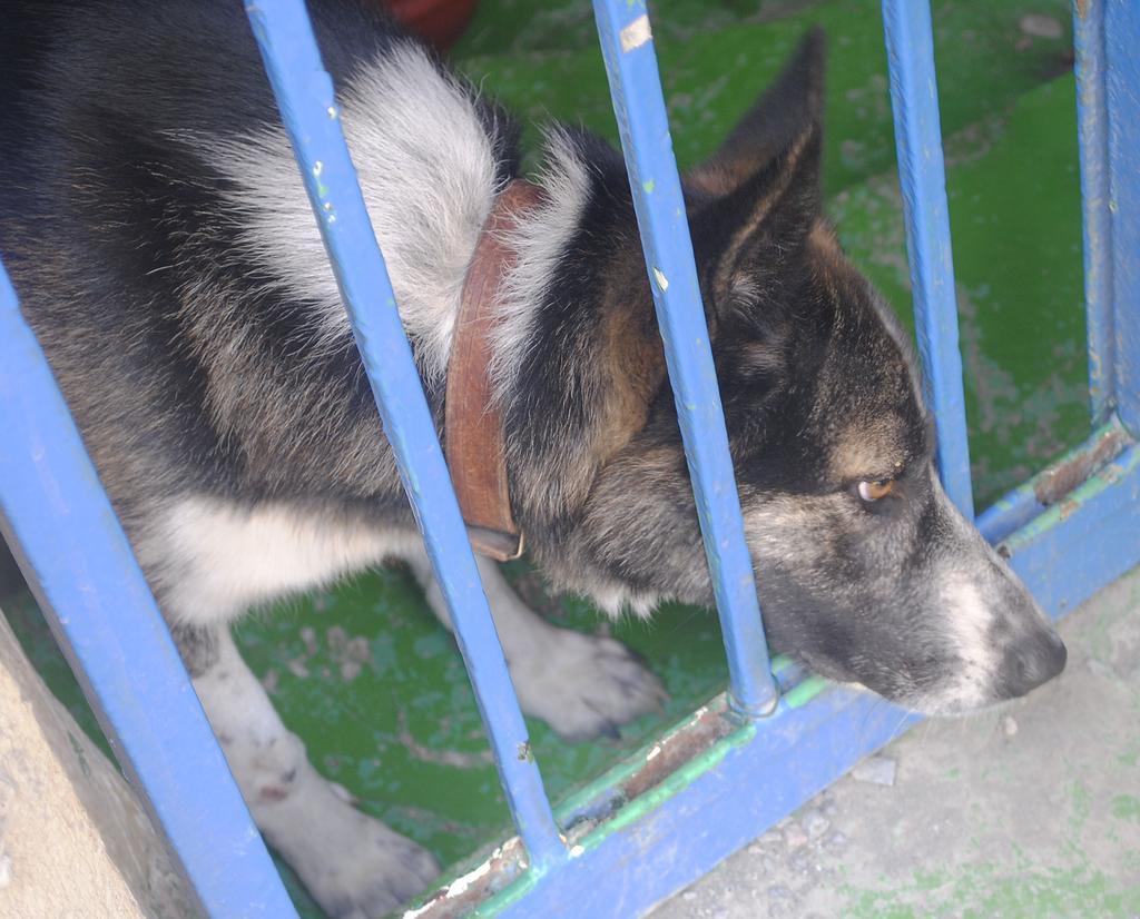Il triste cagnolino...