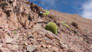 avanzando faticosamente lungo la cresta (12-8-2010)