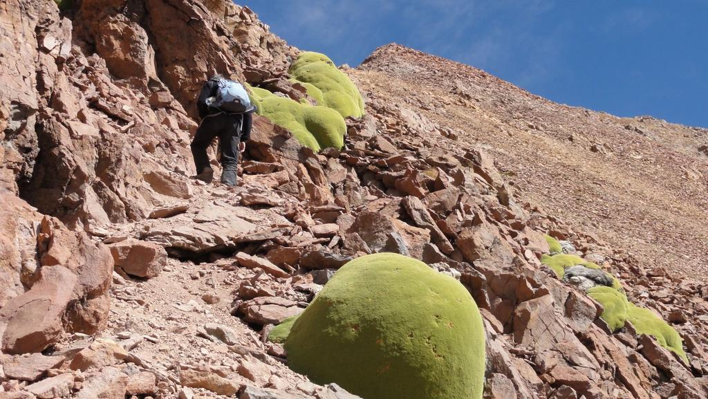 nella parte alta della cresta (12-8-2010)