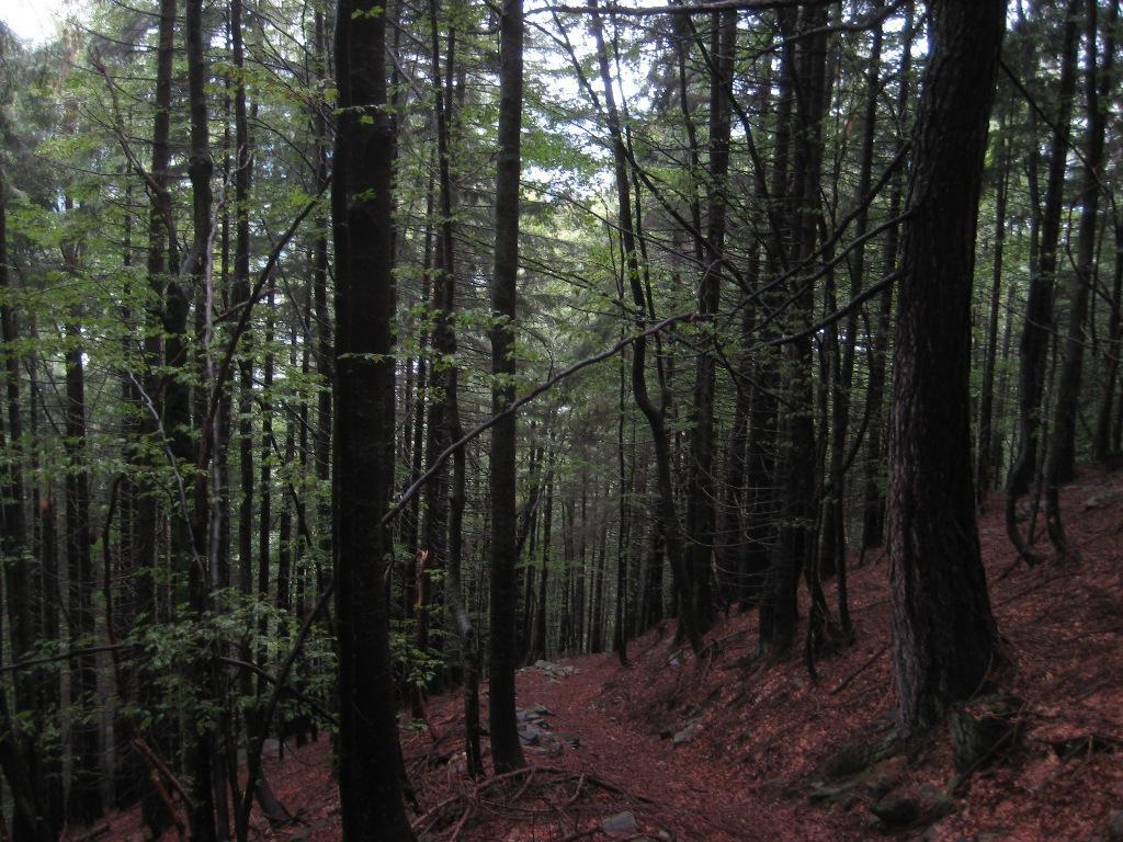 nel bosco Curbello