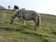 cavallo innevato