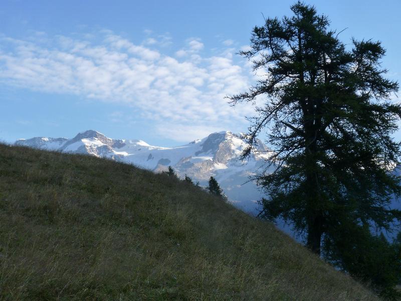 il rosa visto dall'Alpenzu