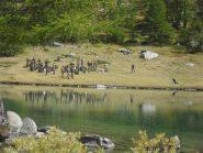 alpini in addestramento sulla riva del lago di Arpy