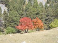 05 - colori autunnali all'Alpe du Lauzet