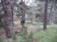 bel sentiero di discesa nel bosco