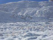 camosci nella neve sopra la baita Djouan