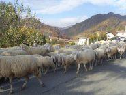 01 - incontri salendo su... le pecore che scendono a valle