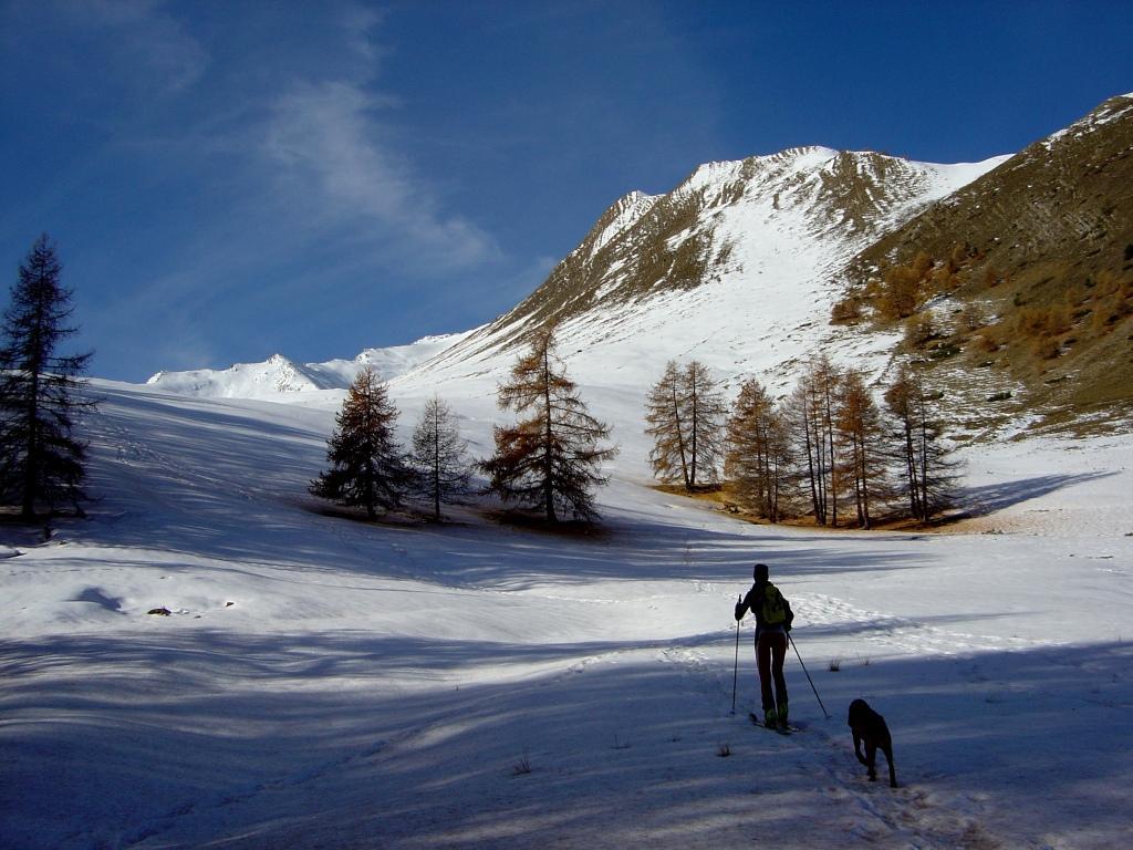 Appena messi gli sci con Fido al seguito
