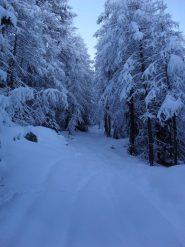 in salita nel bosco,neve immacolata