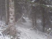 01 - nel bosco sotto la nevicata