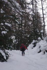 Prima parte nel bosco