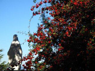 La Madonna della Guardia