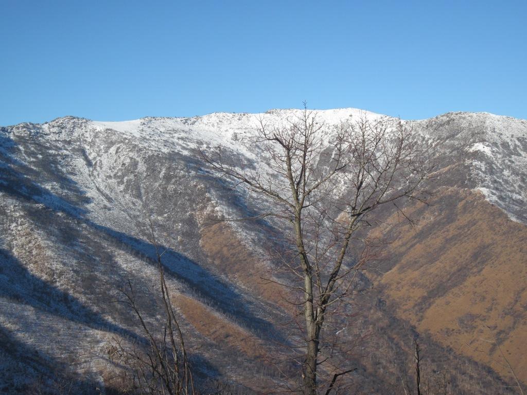 Monte Colombano