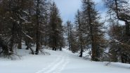 Bella traccia nel bosco