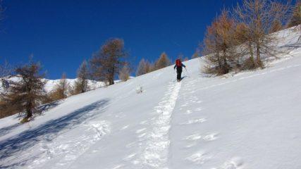 Luciano sale e fa la pista sul versante Sud del Pic de Clausis (1-1-2011)