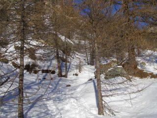 Scorciatoie nel bosco