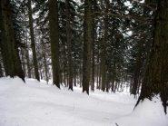 prima di entrare nel bellissimo bosco