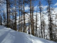 Girovagando nel bosco