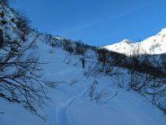 La boschina sopra l'Alpe Luvas