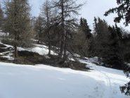 la poca neve nel bosco