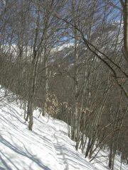 Nel bosco.