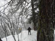 nel bosco al bivio della sorgente