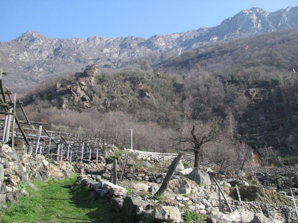Salendo fra le vigne