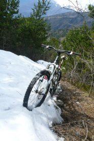 Piantata nella neve fino al disgelo! :)