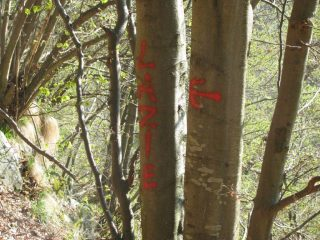 Indicazioni su alberi