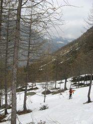 bosco, sotto i 1700 al limite