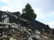 il pino solitario ha resistito all'incendio