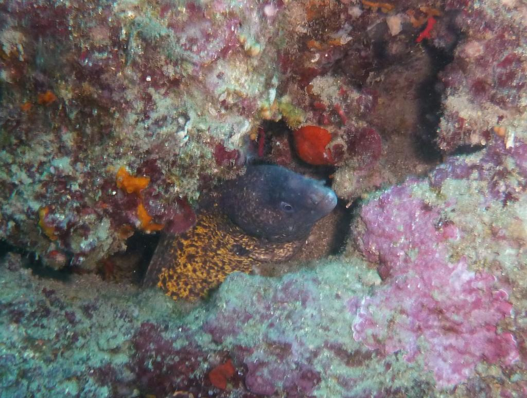 Portofino (Promontorio) Immersione presso Punta Chiappa 2011-05-01