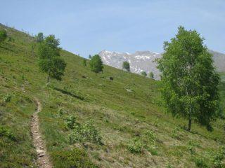Salendo il versante N-E del Monte Calvo
