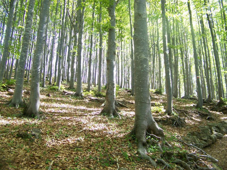 foresta del Penna
