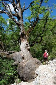 strano albero