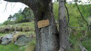 indicazione sull'albero dopo Barmelle