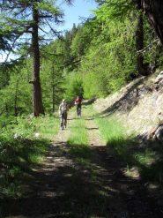sulla poderale lungo il bosco  di conifere
