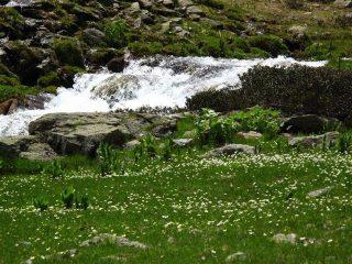 Acqua e fiori