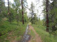12 - la strada nel bosco tra Colle Begino e Chabaud