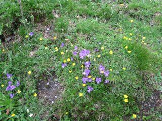 Dieghi...Flowered