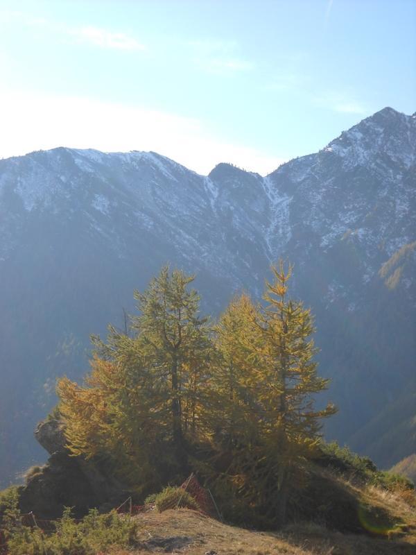 Col Fautet da alpe Culubrusa (Villanova)