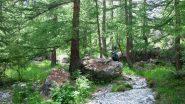 entrando nel bosco, poco oltre il campeggio di Ailefroide (24-6-2011)