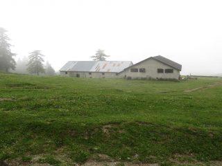 Alpe Arguel