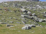 i numerosi animali visti in zona.....