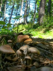 un po' di funghi sul percorso