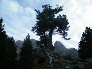 pino e sass rigais